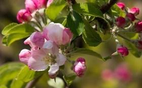 Секрети садіння саджанців плодових та декоративних культур