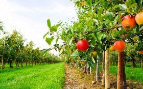 Ранневесенняя, летняя, осенняя обработка сада от вредителей и не только. Видео