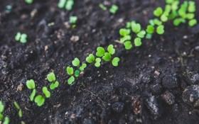 Маленьке насіння – в мерзлу борозну: починаємо посіви під зиму