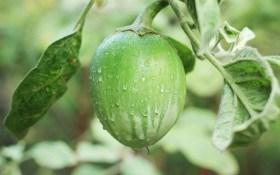 Придане для розсади: еко-технологія вирощування розсади перцю та баклажанів