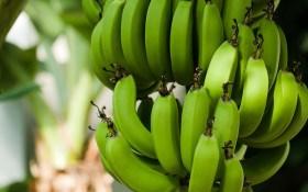 Бананова республіка: вирощуємо тропічну культуру в Україні