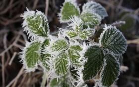 Как защитить растения от весенних заморозков