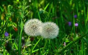 """""""Зелена садиба"""": рослинні настоянки для підживлення та захисту городу"""