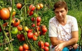 Такі важливі дрібниці: як уникнути основних помилок при пророщуванні насіння овочевих культур