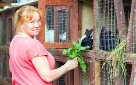 Рацион питания кроликов: чем и как их кормить?