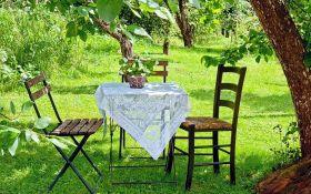 Нужен ли газон под покровом деревьев?
