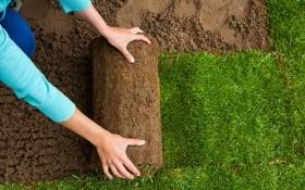 10 «вредных советов» по украдке рулонного газона : как наверняка погубить газон