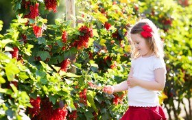 ТОП-5 болезней ягодных кустарников: определяем и боремся