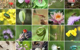 Природосообразный сад: как обеспечить разнообразие растений и насекомых?