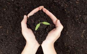 Весенняя пища для растений: удобрение почвы весной