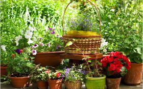 12 правил выбора семян для цветников