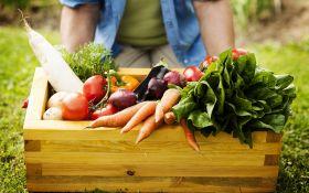 Что посадить в огороде: традиционный овощной набор