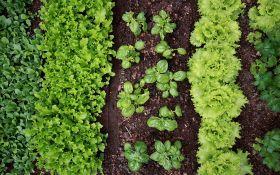 7 подсказок о том, как получить ранний урожай овощей