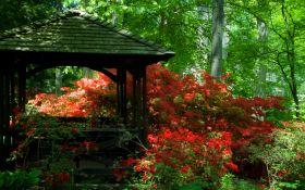 Красный цветник наполнит сад радостью и энергией