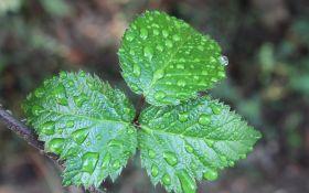 Весенние дожди: чем угрожают ягодам обильные осадки?