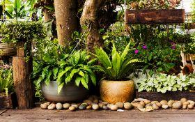 7 причин устроить контейнерный сад