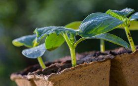 Выращиваем рассаду овощей: зачем, как и когда?