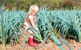 Как вырастить порей у себя на грядке: от рассады — до урожая