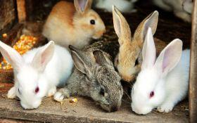 Заболевания пищеварительного тракта у кроликов: профилактика и лечение