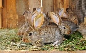 Содержание кроликов: общие правила выращивания