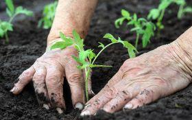 Высаживаем рассаду: советы астролога