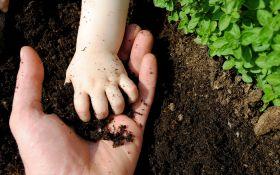 Органический сад: основы биоземледелия