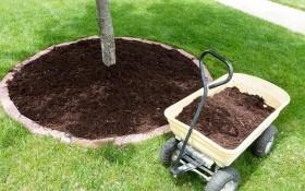 Мульчирование почвы: зачем, как и чем?
