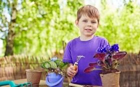 6 секретов успешного выращивания сенполий от опытного цветовода