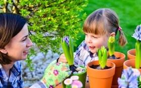 4 преимущества посадки луковичных цветов в горшках