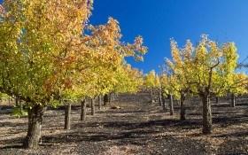 Морозостойкий сад: как его подготовить к зиме?