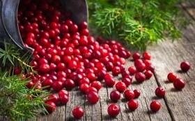 Целебная красная ягода: полезные свойства клюквы