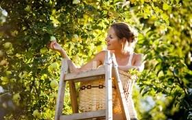 «Дедовские» методы защиты сада