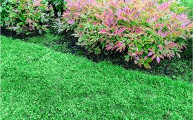 Как подсевать опустевшие участки садового газона?