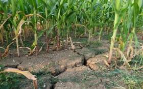 Засоби захисту городу від спеки:  вода, тінь та біла глина