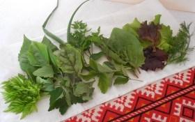 Трава біля хати: досвід вирощування цілющих рослин на ділянці