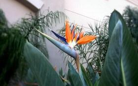 Зелені гіганти та мініатюри: прнципи створення фітокомпозицій з кімнатних рослин
