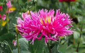 Календар квітникаря: вересневі клопоти