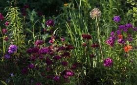 Секрети регулярного стилю: модульні квітники, партери та кам'янисті ділянки