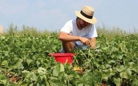 Допоможе фітотерапія: лікуємо перевтому, сонячні опіки та розтягнення після роботи на городі
