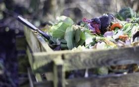 Корисні органічні відходи: як відновити родючість ґрунту на городі та в полі
