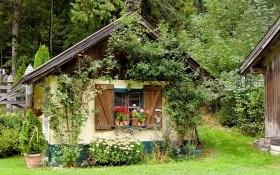 Садові вертикалі: озеленення парканів, огорож, альтанок та присадибних будівель