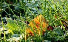 На зарядку ставай! Вологозарядний полив – запорука успішної зимівлі саду
