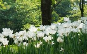Сад в зелених і білих шатах: кольори для спокою та відпочинку