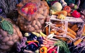 Врожай рахуй та перевіряй: як правильно зберігати овочі та коренеплоди до весни