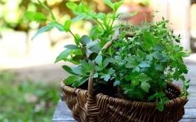 Соковиті вітаміни на кожен день: користь трав та зелених овочів