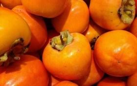 Хурма: выращиваем в защищенном грунте