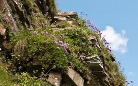 Гори в мініатюрі: поради з побудови альпінарію у садибі