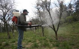 Поки сади не розквітли: весняні обприскування