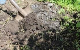 Час подбати про город: підготовка ґрунту до зимівлі