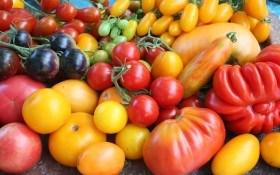 Збираємо томатну колекцію: сорти на будь-який смак